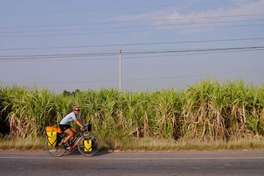 Passing sugar cane fields.