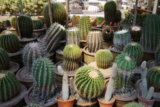 Xieng Khuan Buddha Park specialised in growing cacti.
