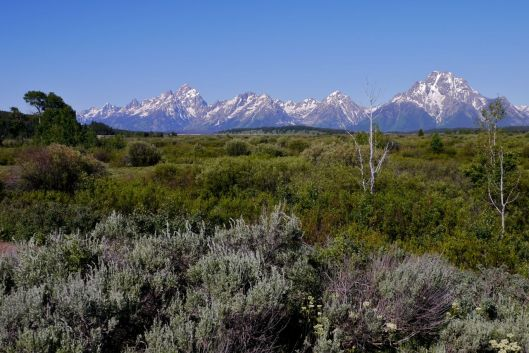 Grand Tetons, view from the  Northern Edge of Jackson Lake, WY.